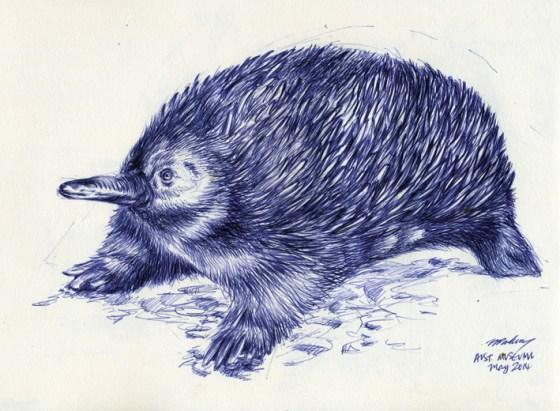 Echidna - drawn with a blue biro