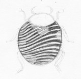 Exercise_2_D3_zentangle_quick_sketch