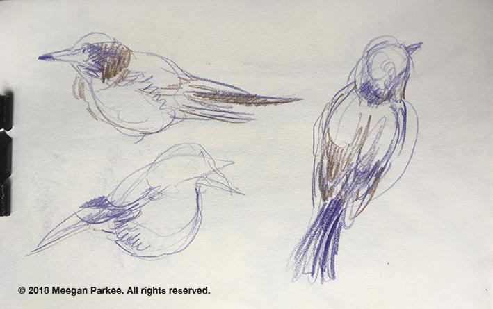 Colour_pencil_on_location_Canterbury_2_bird2