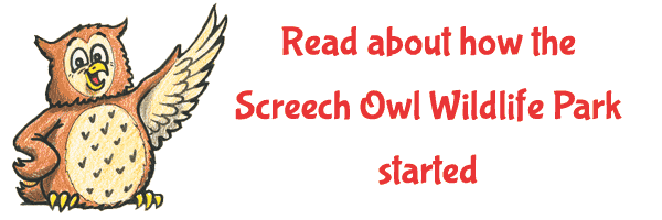 Read about how the Screech Owl Wildlife Park started