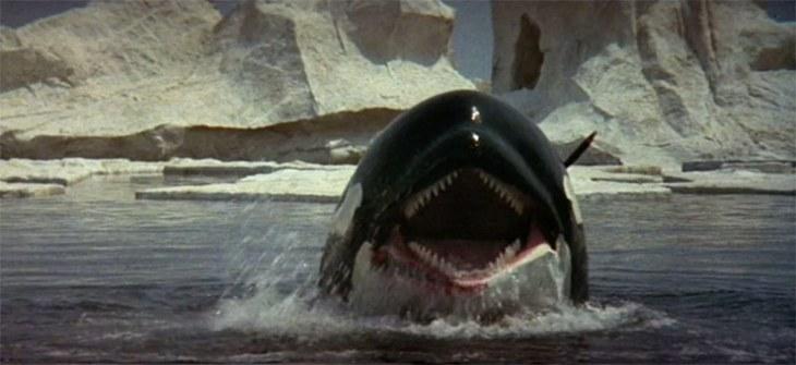 ff-orca-2