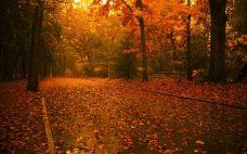 Autumn Wallpapers (12)