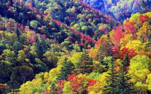 Autumn Wallpapers (28)