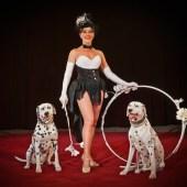 visu_03_Cirque-Alexis-Gruss---Ellipse