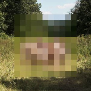 The Hotelier Goodness Albums of the Month