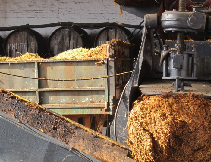 Orujo, or waste pulp, leaves the grape-crushing machine.