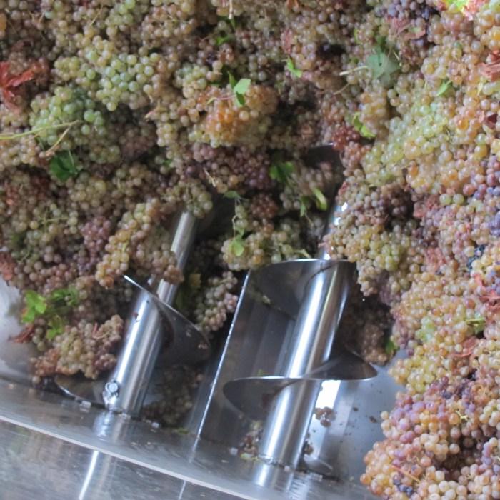 wine, grapes, Andrade, Bodegas Andrade, Condado de Huelva, Bollullos de la Mitacion