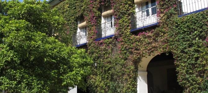 Inside the Palacio de las Dueñas – home of a Seville icon