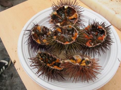 erizo, sea urchin, Carnaval, Cadiz, Carnaval de Cadiz, family