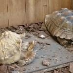 Parrot Store Big Tortoises