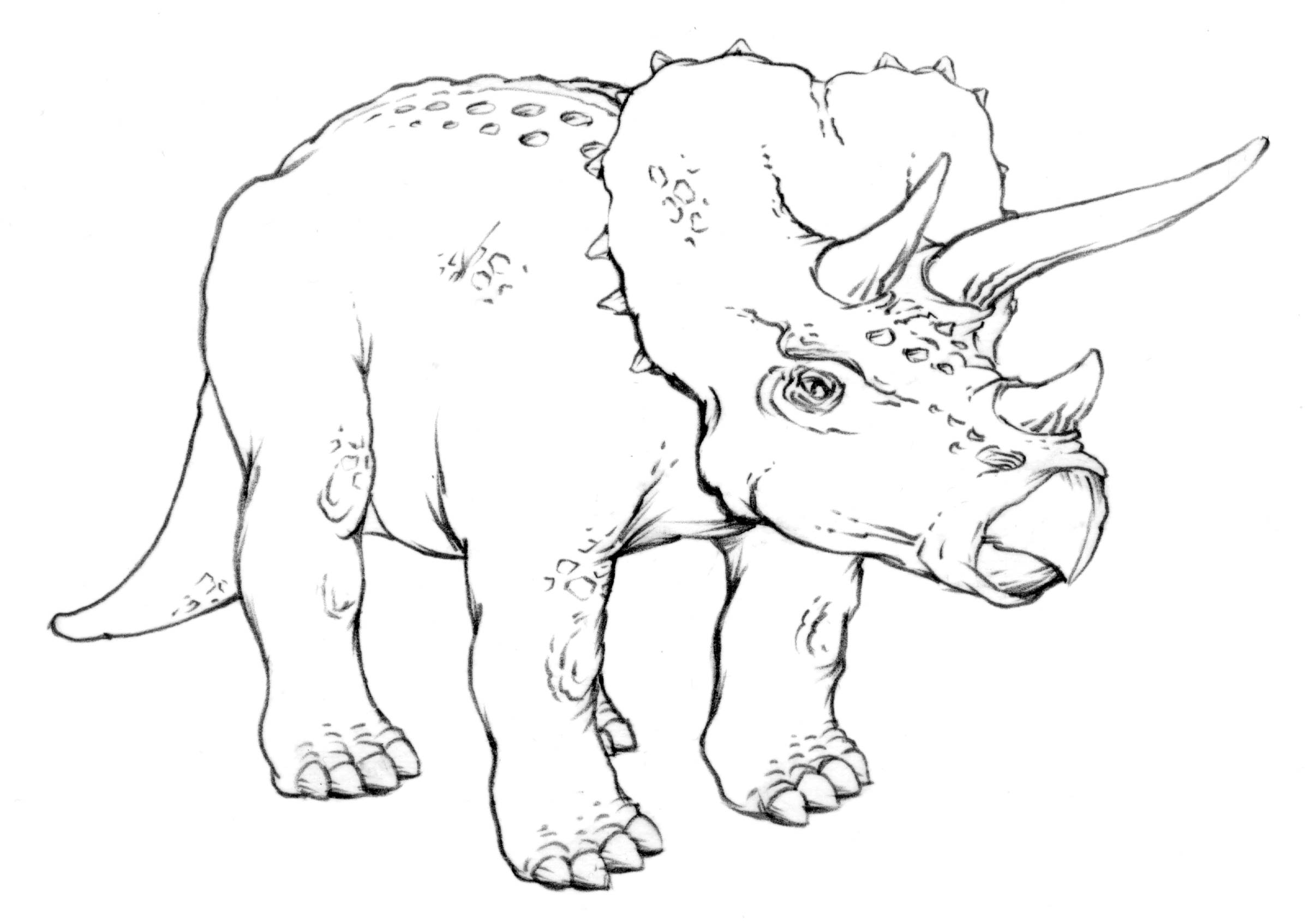 Drawing Lesson Triceratops