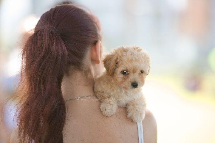 Wollongong Pet Photographer