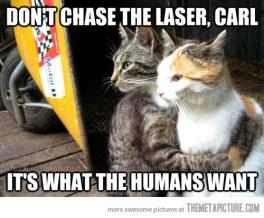 funny-cats-hugging-laser