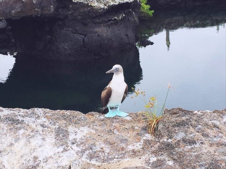 Galapagos travel tips -sunset-blue-footed-boobie