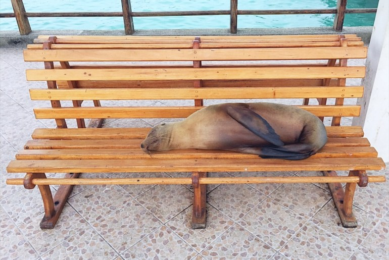 Galapagos travel tips - sea lion
