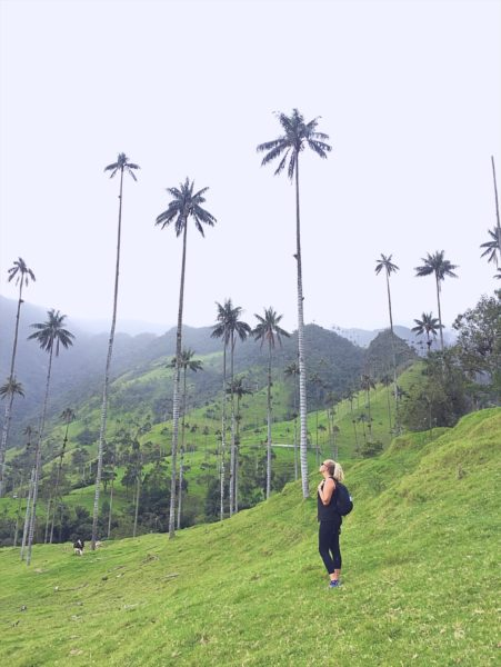 Things to do in Salento - Colombia - Cocora Valley - Valle de cocora