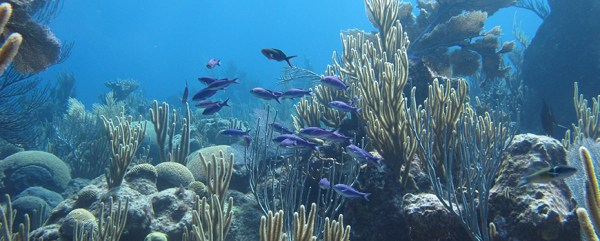 Study of Bermuda Corals Finds Temperature Is Most ...