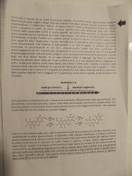 """""""Il colore rosso in chimica"""", elaborato proposto dalle classi I C e I D (p. 2)."""
