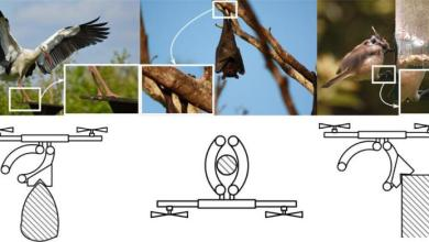 Photo of ფრინველის კლანჭებისმაგვარი საკიდებით დრონები შეძლებენ ხეზე ჩამოეკიდონ და დაზოგონ ენერგია