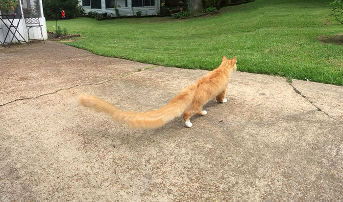 Really Long Tail