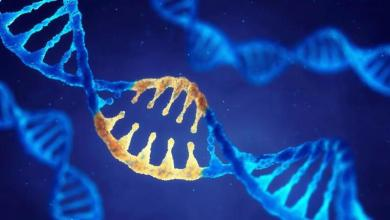 Photo of მეცნიერები მოუწოდებენ დნმ-ის რედაქტირების მორატორიუმისკენ