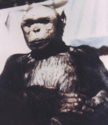 Photo of ოლივერი – ადამიანი-შიმპანზე