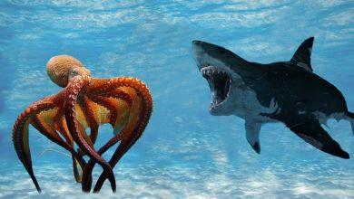 Photo of ზვიგენი VS რვაფეხა