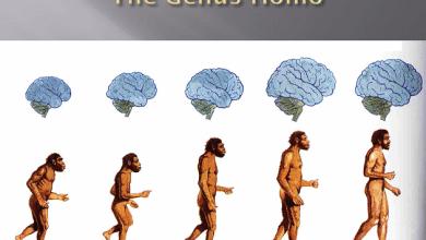 Photo of მცდარი შეხედულებები ევოლუციის თეორიაზე