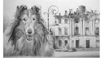 Photo of ცხოველები, რომლებმაც მეორე მსოფლიო ომის გამარჯვებაში დიდი წვლილი შეიტანეს