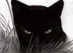 Photo of ედგარ ალან პო – შავი კატა