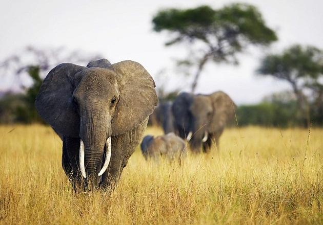 Photo of სპილოები