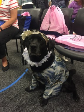Animal assisted therapy pets bring smiles