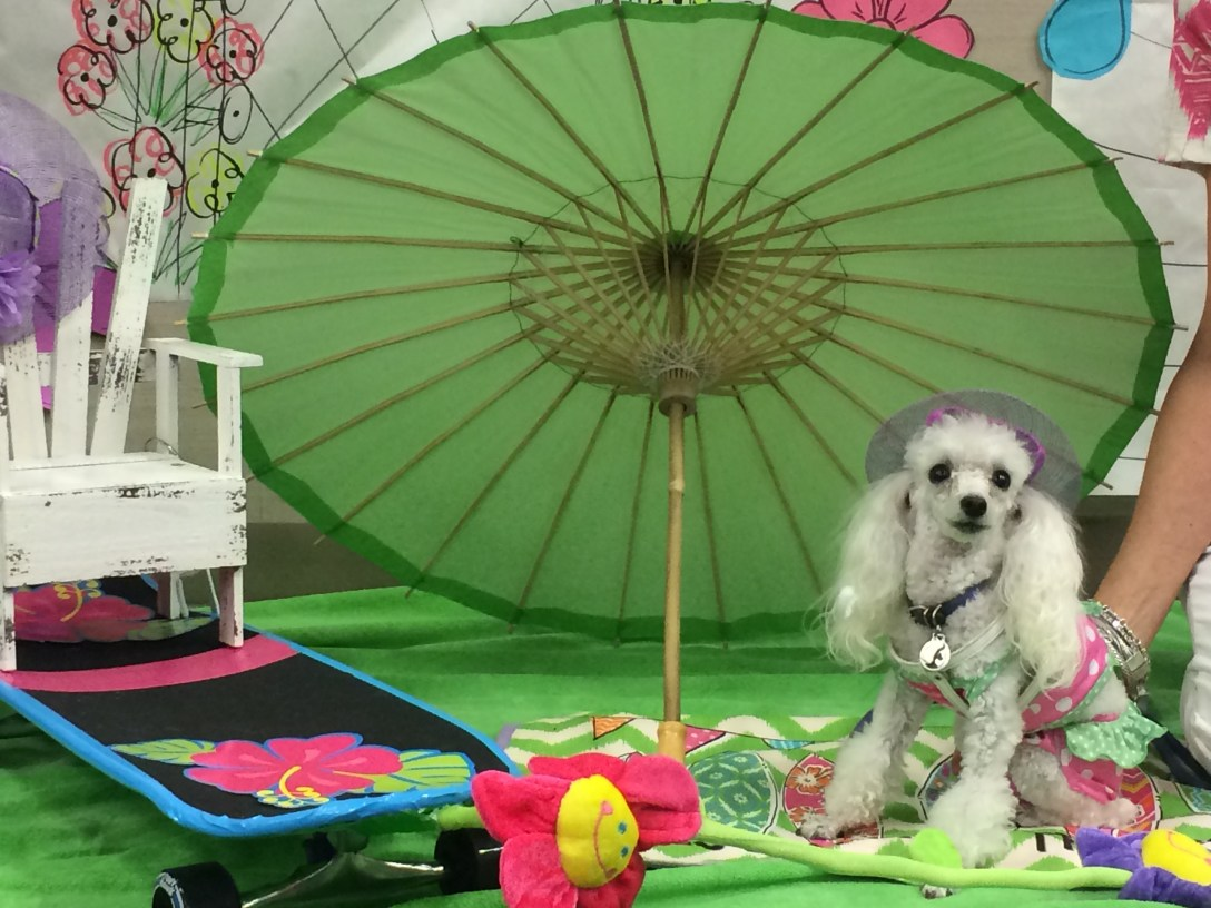 Animal assisted therapy pets stay cool at the Dog Days of Summer event