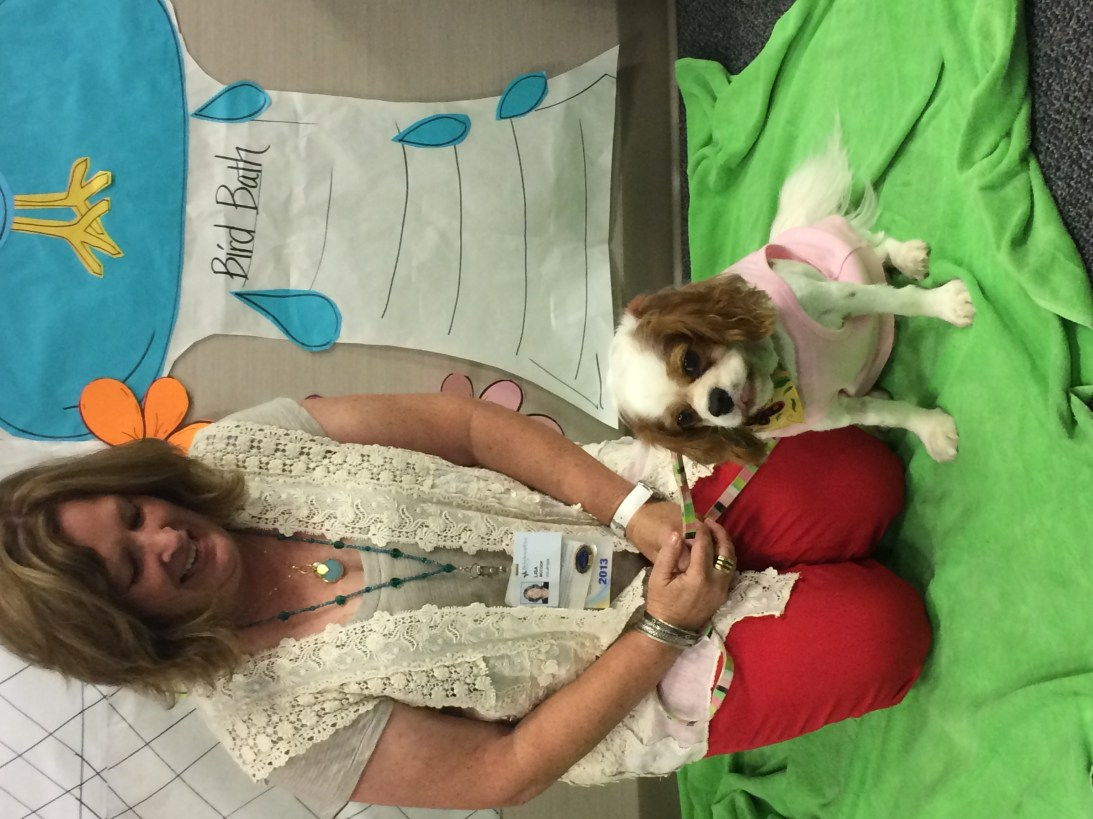 animal assisted therapy volunteers