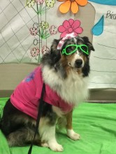 Dressed to impress at Baylor Plano Dog Days of Summer event