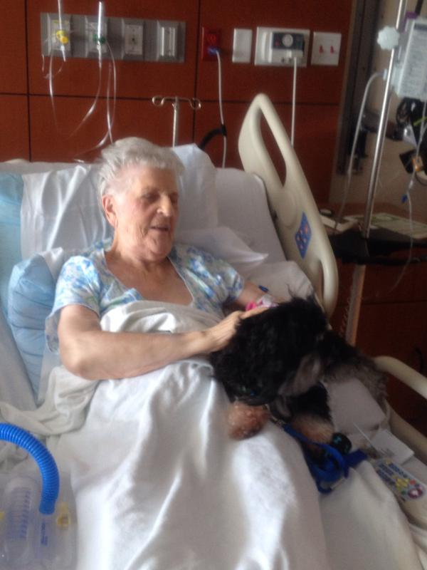 Therapy dogs visit patients