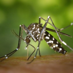 Take caution to avoid mosquitoes, recent West Nile cases confirmed
