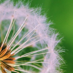 Are allergy seasons getting worse year after year?