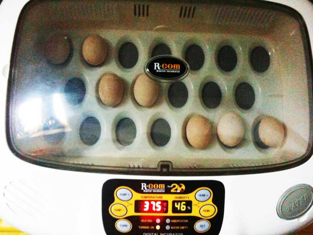 Incubator is up and running....