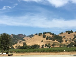 Things to do in San Francisco, Portland and Everywhere in Between - Travel Guide - California Wineries & Oregon Wineries - SCsScoop.com