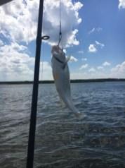 Will's fish!