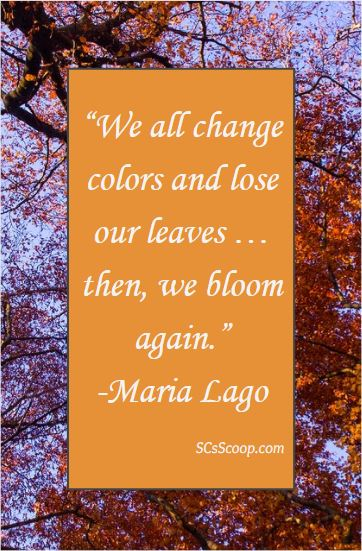 "Fall Quote - We all change colors and lose our leaves … then, we bloom again."" SCsScoop.com"