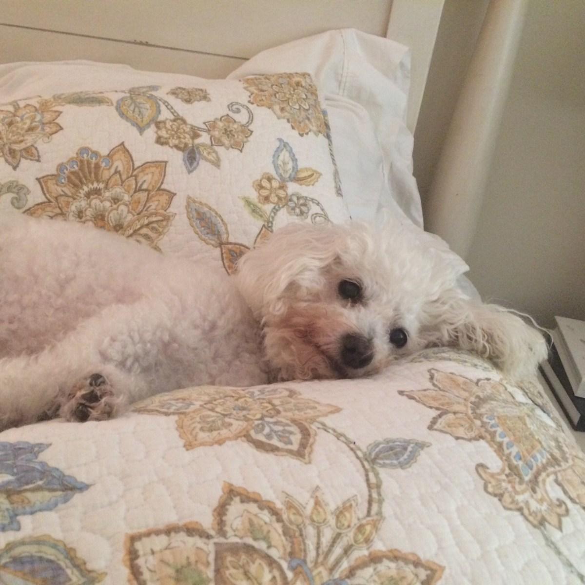 How I Got My Dog & How my Dog Enhanced my Life - SCsScoop.com