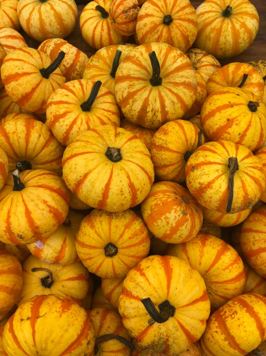 Nalls Produce - Picking out Pumpkins & Produce in Northern Virginia - SCsScoop.com