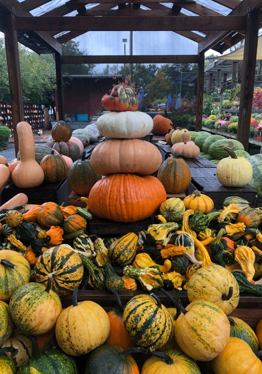 Picking out Pumpkins & Produce in Northern Virginia - SCsScoop.com