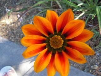 Flowers 035
