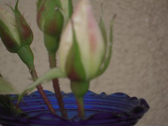 Flowers 073
