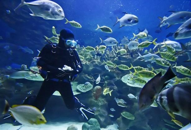 aquarium diver and fish
