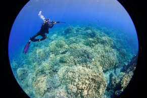 NOAA diver Shannon Lyday photographs her dive buddy Mitchell Tartt while on a research expedition to document the reefs of Hawaiian Islands Humpback Whale National Marine Sanctuary. Don't forget to bring a camera with you on your dive — with unforgettable seascapes, you're bound to get some amazing shots. (Photo credit: Mitchell Tartt/NOAA)