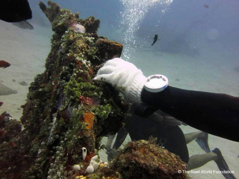 Bad Diver Behavior